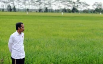 Kembangkan Food Estate di Kalteng dan Sumut